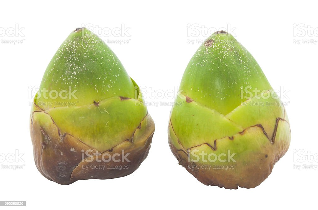 Close up of unripe coconut on white background royalty-free stock photo