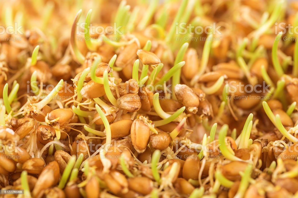 Close up of wheat germ background stock photo