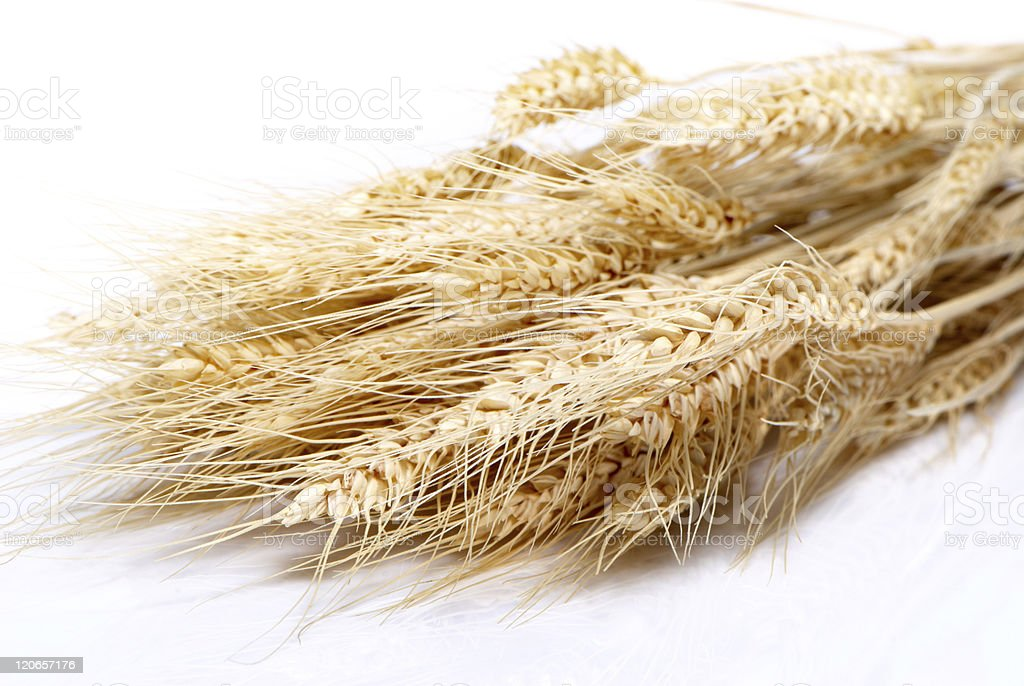 Close up of wheat nice detail background royalty-free stock photo