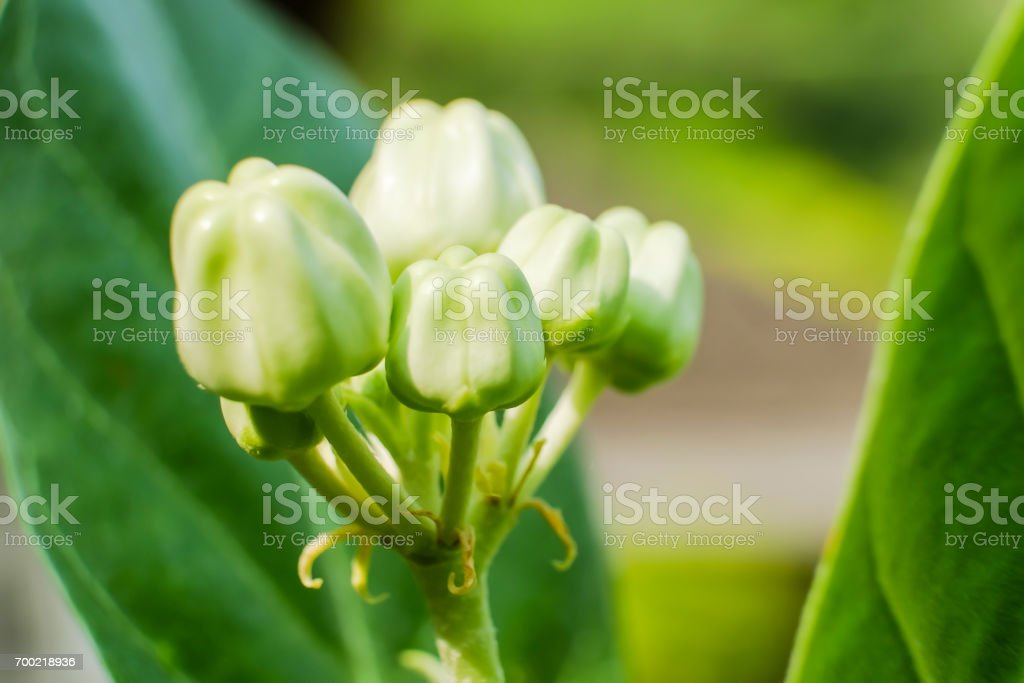 Close Up Of White Crown Flower And Insect Meaning Of Love Stock