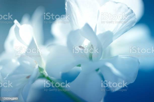 Close up of white flower shades of white soft dreamy image blossoming picture id1200541893?b=1&k=6&m=1200541893&s=612x612&h= lpols2f4j0kmzigtpmzqjv tn6ogcqj9gvzbh4tbli=