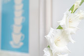 Close up of white gladioli decorating an interior space.  Belfast, Northern Ireland.
