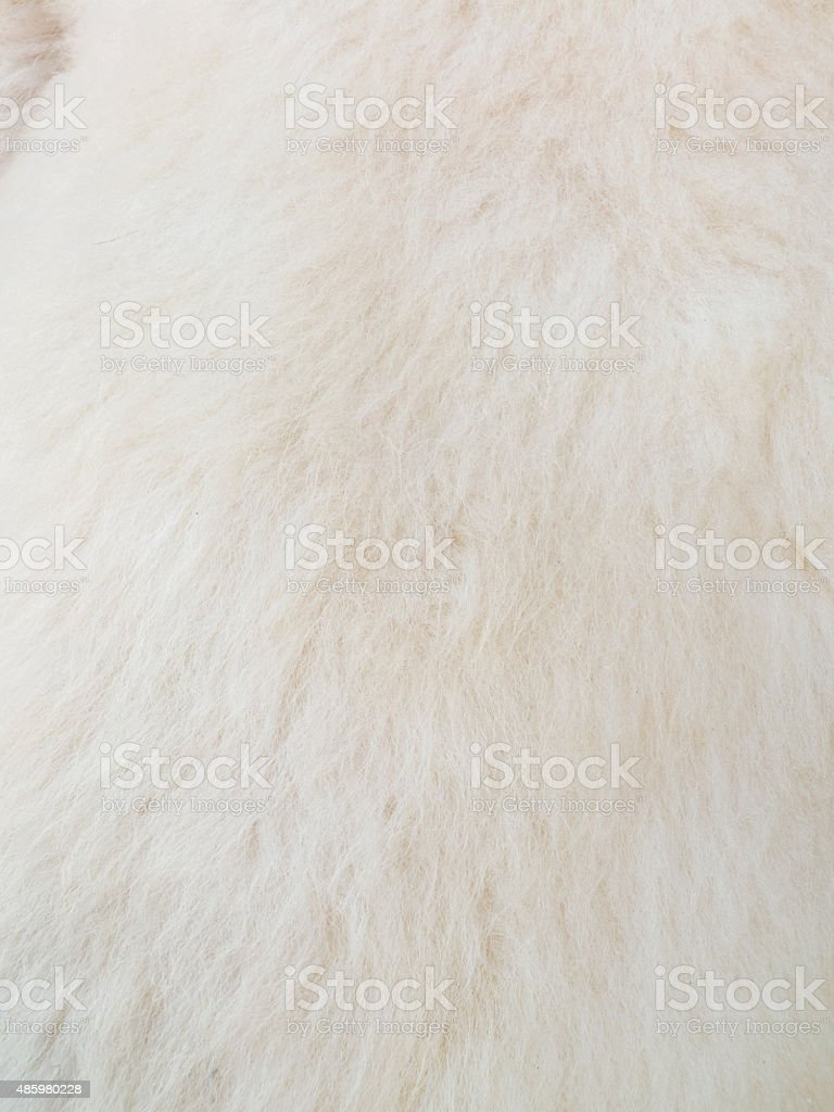 Close up of white skinned goat fur stock photo
