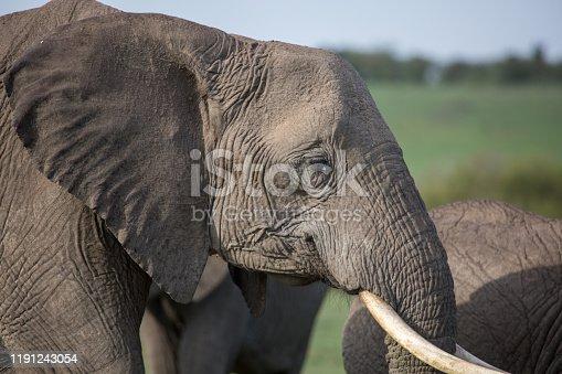 Taken in Kenya on safari in 2017