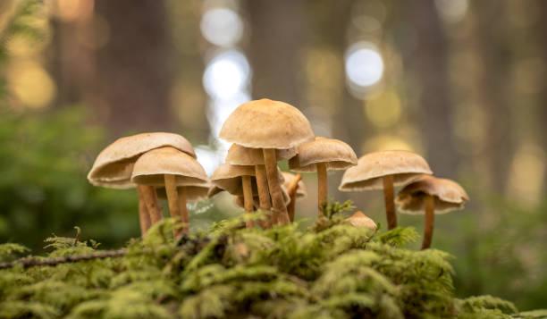 Close up of wild mushrooms stock photo