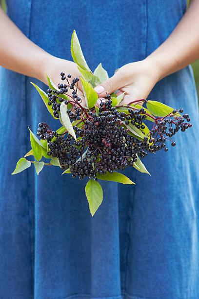 Nahaufnahme von Frau Holding Bündel von Elderberries – Foto