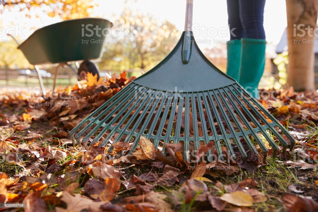 Close Up Of Woman Raking Autumn Leaves In Garden stock photo
