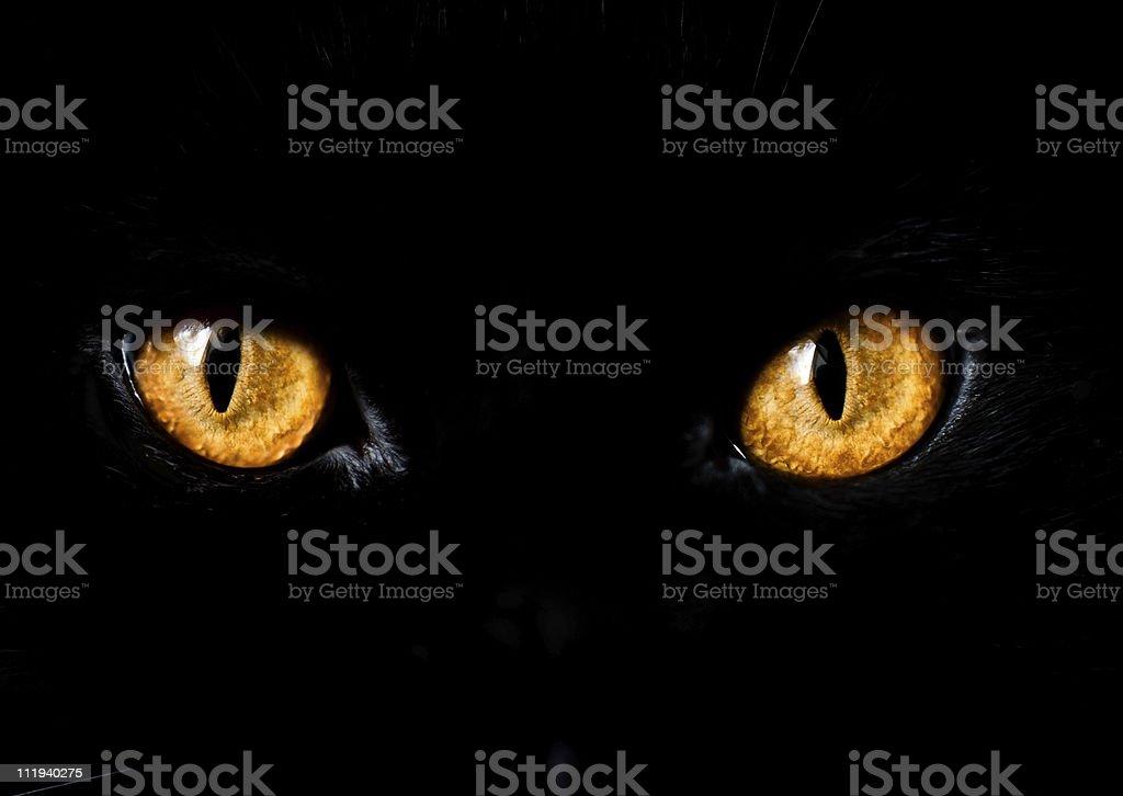 Close up of yellow eyes on black cat stock photo