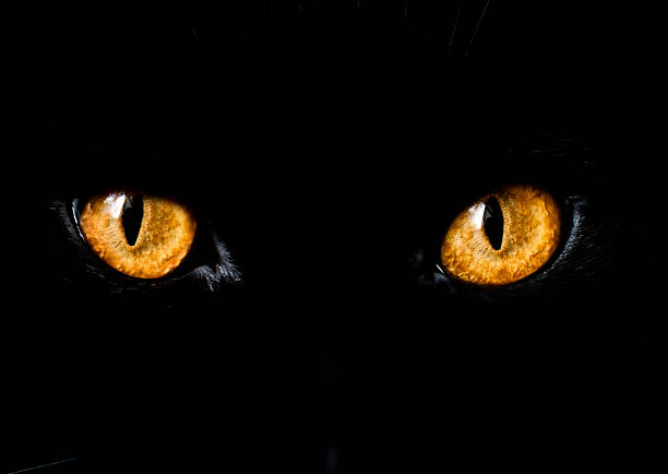 Close up of yellow eyes on black cat stock photo