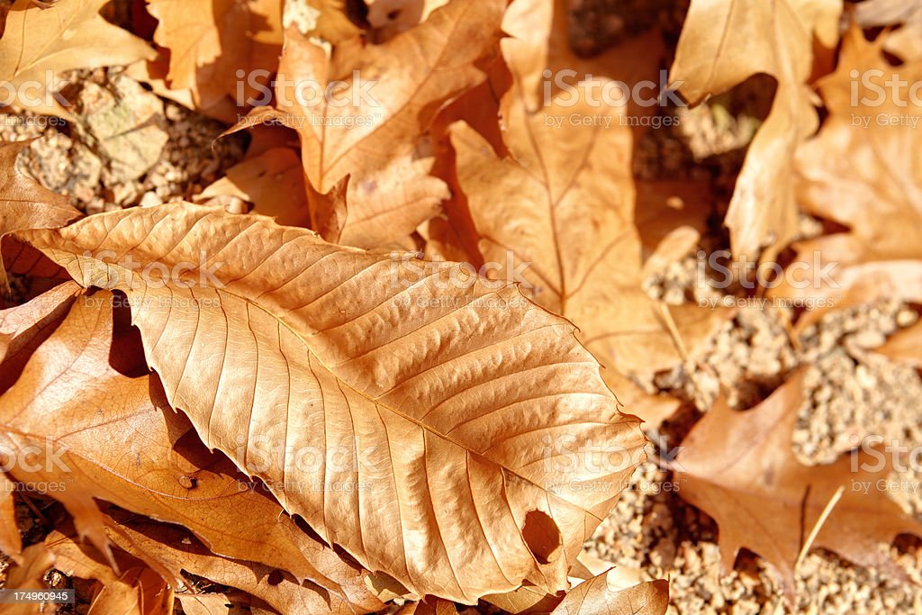 close up of yellow fall foliage royalty-free stock photo