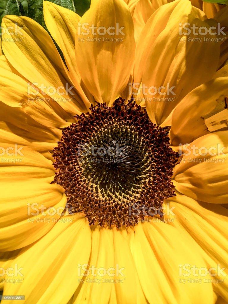 Close up of Yellow Flower zbiór zdjęć royalty-free