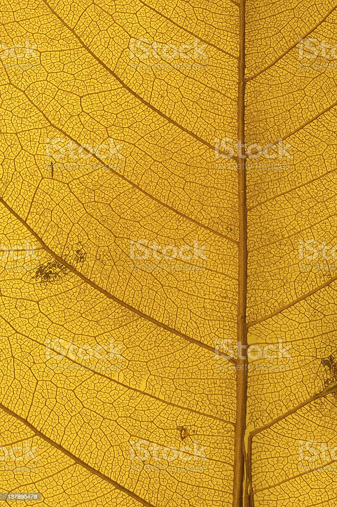 Close up of yellow leaf texture royalty-free stock photo