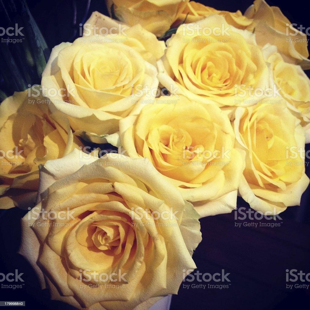 삼각대를 노란색 장미 royalty-free 스톡 사진