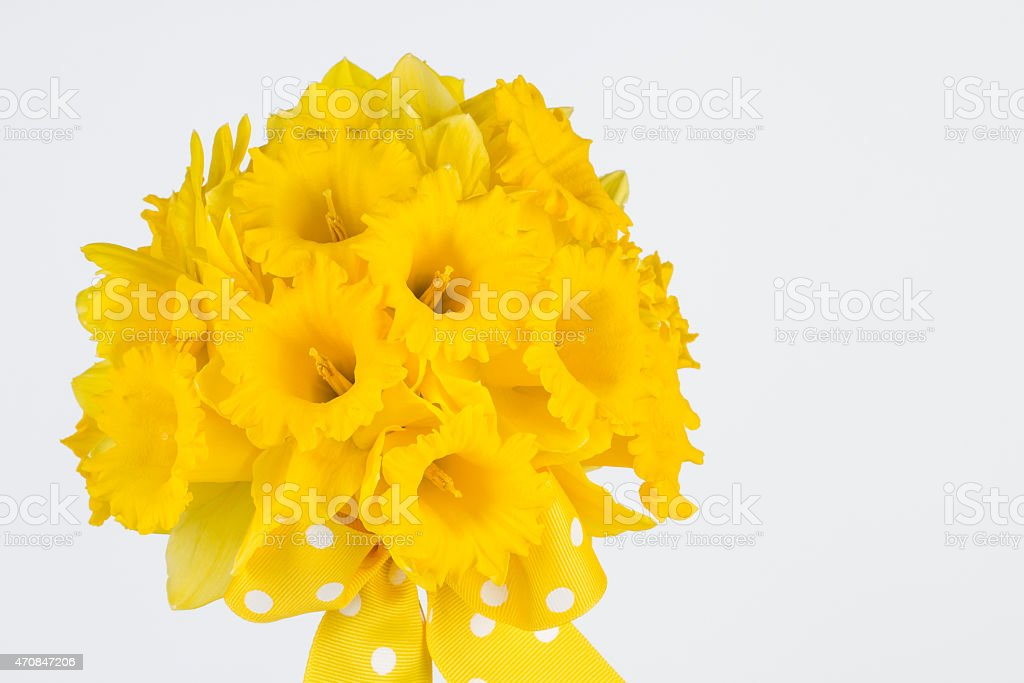 Close up of yellow trumpet daffodil bouquet stock photo