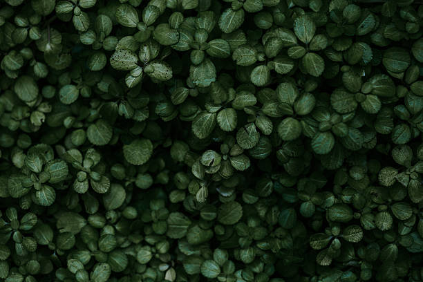 Close Up of Young Green Leafy Plants stock photo