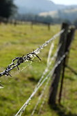 Close up on a barbed wire fence with spiders webs and dew