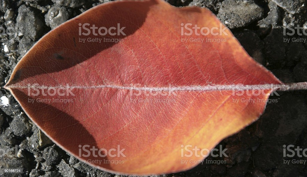 Close up on a Lip Shaped Leaf royalty-free stock photo