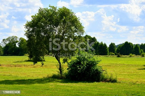 Close up on a single deciduous tree and a shrub growing in the middle of a vast field, meadow, or pastureland spotted on a cloudy yet warm summer day on a Polish countryside during a hike