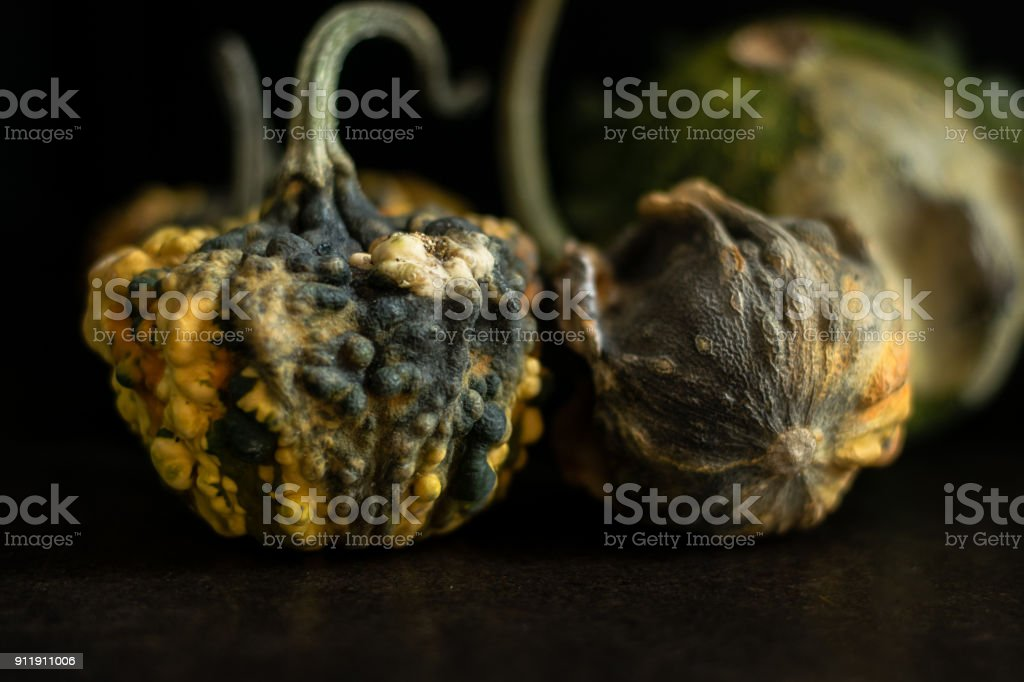 Close up on decaying gourds stock photo