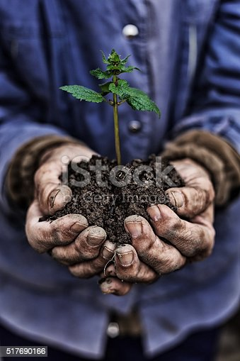 621615390istockphoto Close up on old man's hands holding new growth 517690166