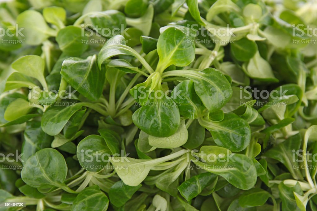 close up on salad stock photo