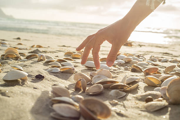 Close up on woman's hand picking up seashells from beach - Photo