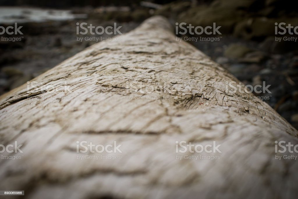 close up on wood grain on a driftwood log stock photo