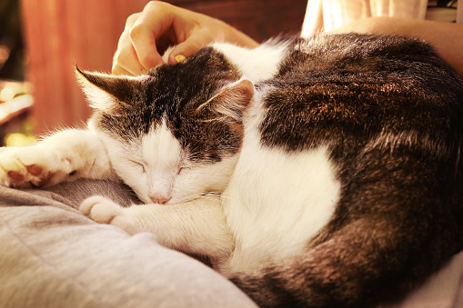 istock close up outdoor photo of the cat on lap 605781970