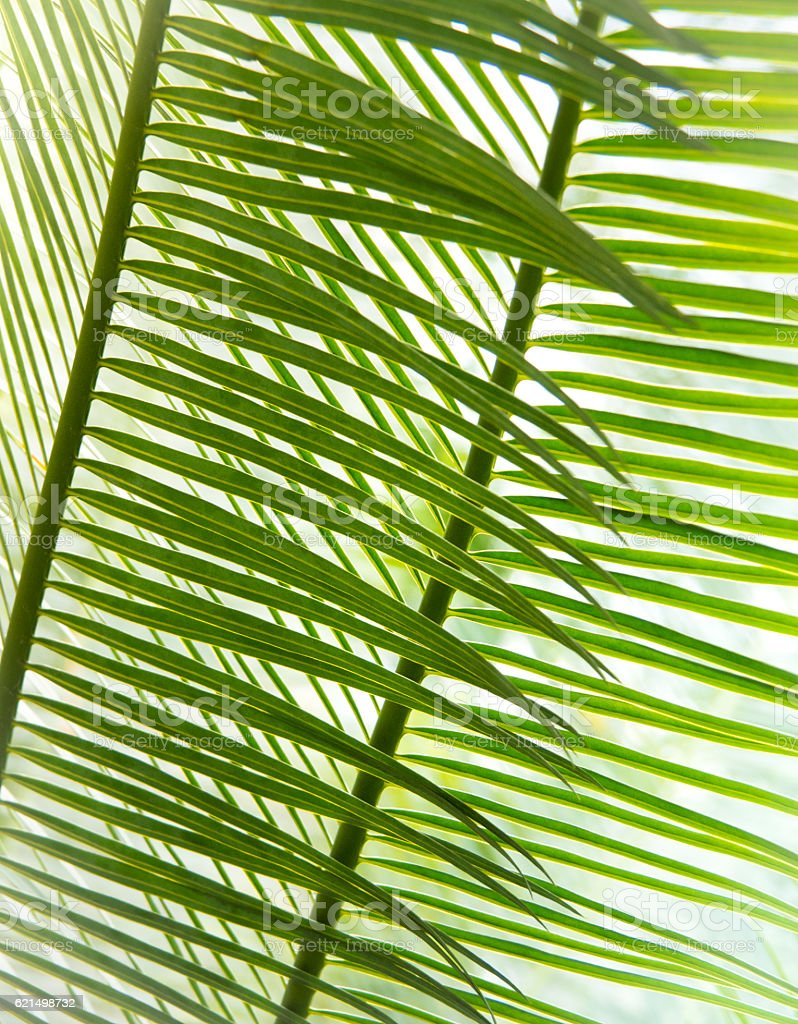 Close up : Palm Leaves Lizenzfreies stock-foto