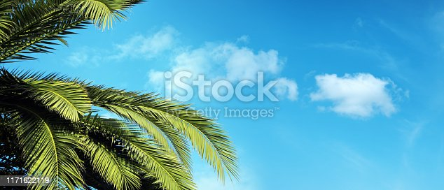Green palm tree leaves over sunny blue sky