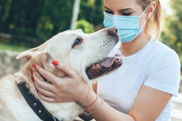 Close up photo of a caucasian blonde woman with medical mask on face playing outside with her dog stock photo