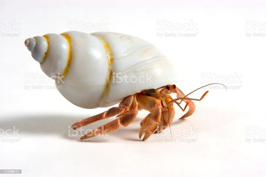 Close up photo of a Hermit crab on the move stock photo