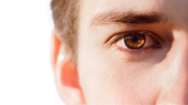 Close up photo of man eye. Brown eye of white european type man. stock photo