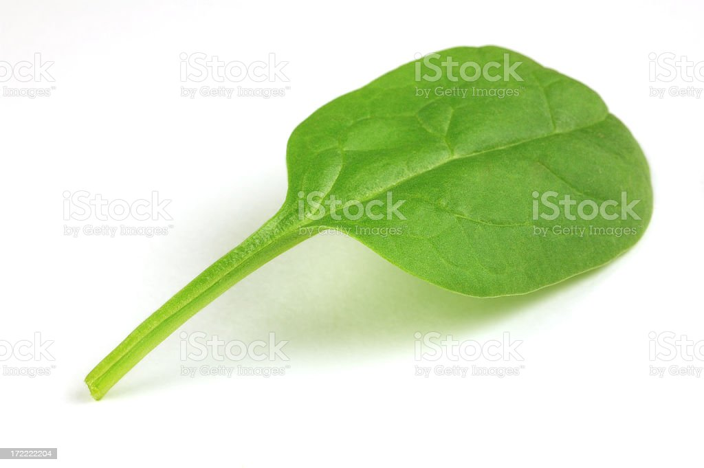 Close up photo of spinach leaf on white background royalty-free stock photo