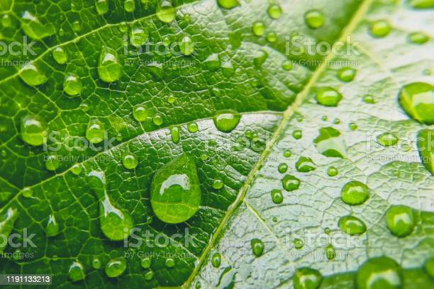 Photo of Close up photo of water drops on a green leaf