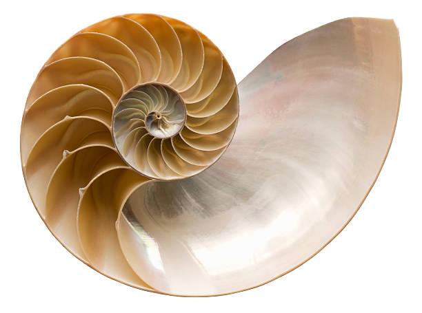 close up picture of a shiny nautilus seashell - nautilus stock pictures, royalty-free photos & images