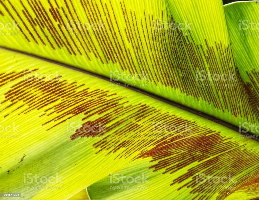 Close up picture of fern spore. royalty-free stock photo