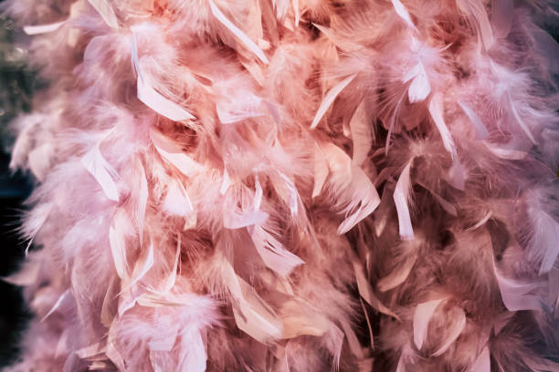 gros plan des plumes boa rose - cabaret photos et images de collection
