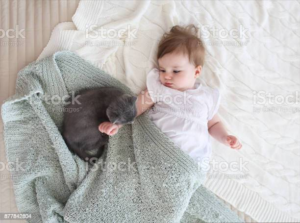 Close up portrait of a beautiful baby with kitten picture id877842804?b=1&k=6&m=877842804&s=612x612&h=qxhpzxv6xld4xdqconoa5e3us mjntmixso7ygqftna=