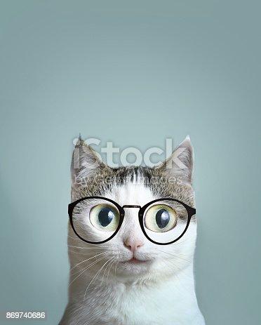 istock close up portrait of blue eyed cat 869740686