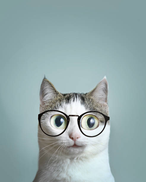 Close up portrait of blue eyed cat picture id869740686?b=1&k=6&m=869740686&s=612x612&w=0&h=wava4wk l2xqmxxhqi7x4loxpbnzfm21rrpzkjjiixu=
