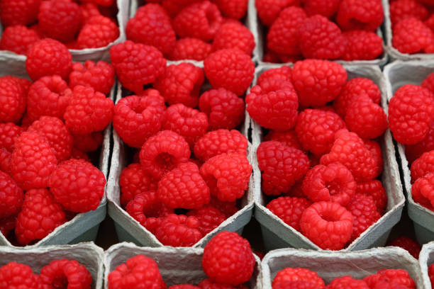 Close up red ripe raspberry on retail display Close up fresh red ripe raspberry berries in plastic container boxes on retail display of farmers market, high angle view fruit carton stock pictures, royalty-free photos & images