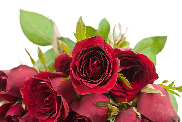 Close up red rose picture id154038348?b=1&k=6&m=154038348&s=612x612&w=0&h=iegjhwbj1bbkpt6vdt1ic8fhah wqtjgqby9cltegeo=