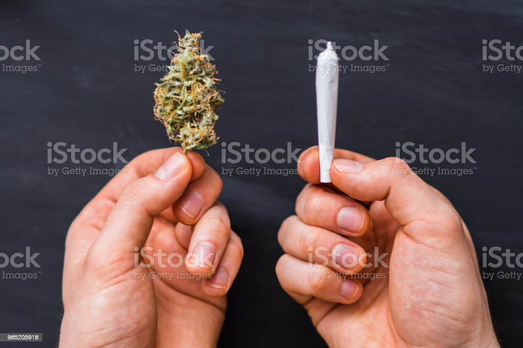 close up rolled weed in hand of man rolled Joint buds of marijuana and bud of cannabis zbiór zdjęć royalty-free