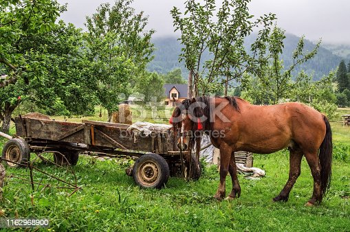 Close up. Rural farm in the Carpathian mountains. Brown horse is grazed near an old wooden wagon.