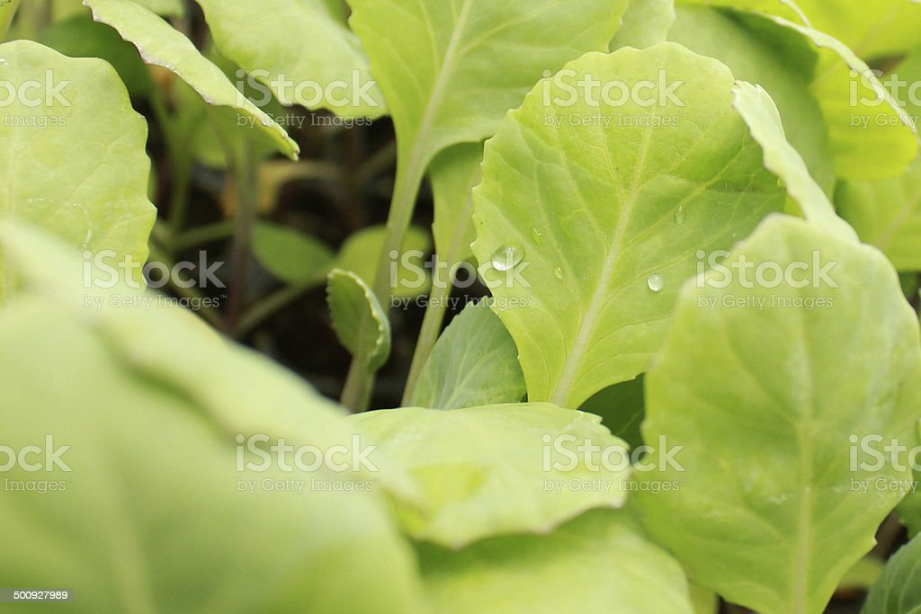 Close up shoot of green leafs stock photo
