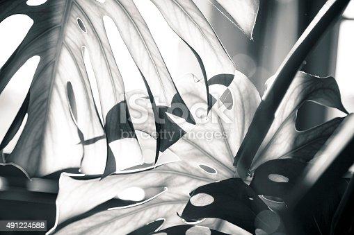 637513166istockphoto close up shot of a palm tree leaf 491224588