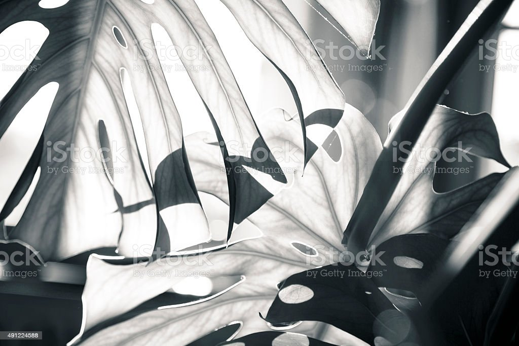 Nahaufnahme von einer Palme Blätter – Foto