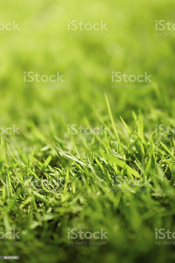 Close up shot of green grass royalty-free stock photo
