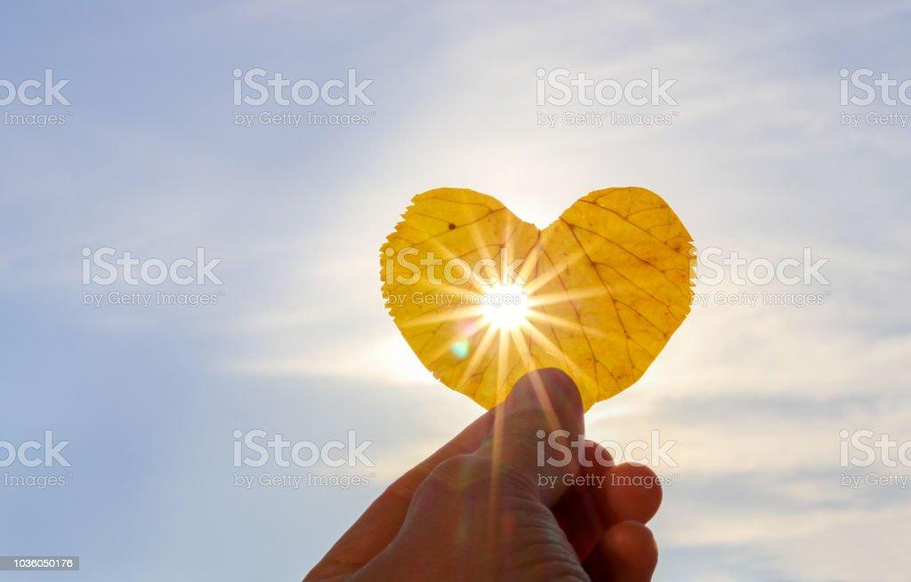 Schuss von Hand mit gelben Blatt der Herzform mit Sonnenstrahlen, die es am hellblauen Himmelshintergrund durchscheinen hautnah. Ich liebe Herbst Konzept. Textfreiraum – Foto